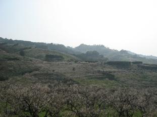 Minabe01